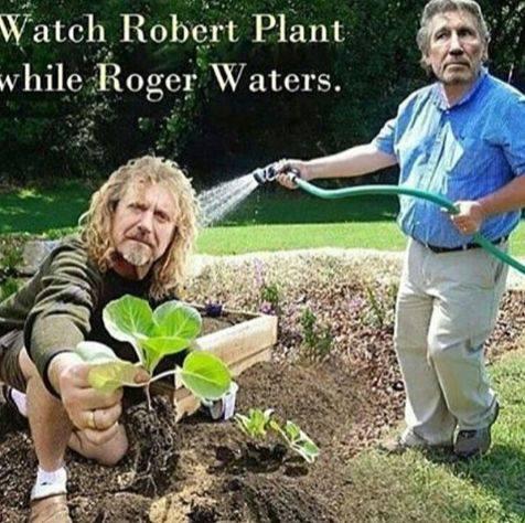 plant waters.jpg